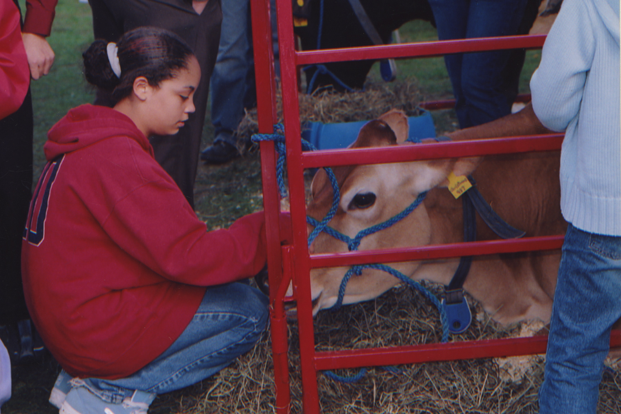 a young woman petting a cow