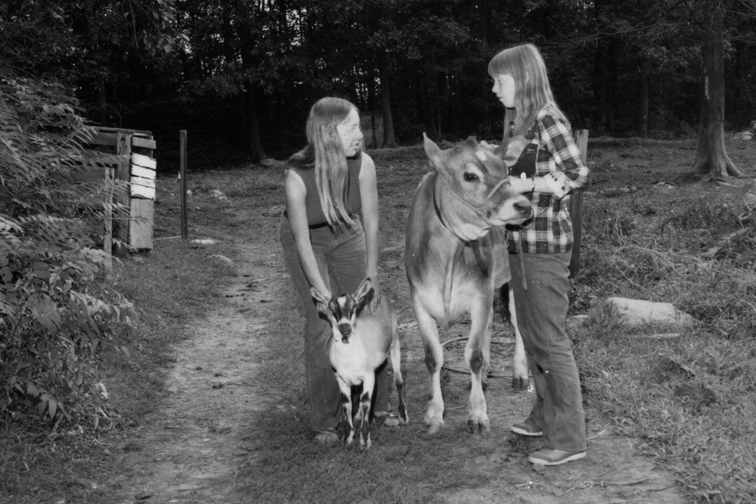 women standing on a farm road with a cow and a goat