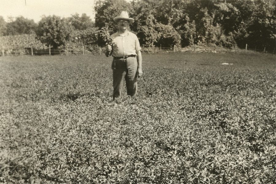 A man standing in a field of alfalfa
